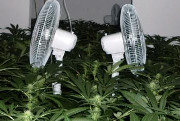 SEK Einsatz | Cannabis Aufzuchtanlagen entdeckt