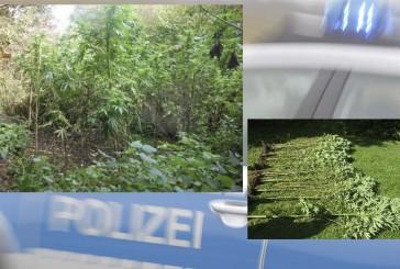 Polizei rodet Cannabisplantage auf Waldfriedhof in München