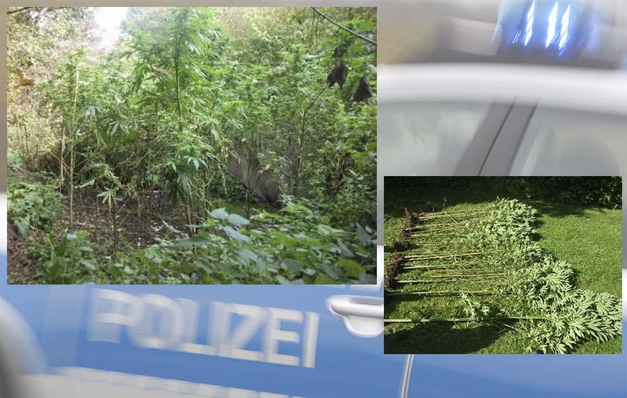 Die sichergestellten Pflanzen   Fotos: © Polizei
