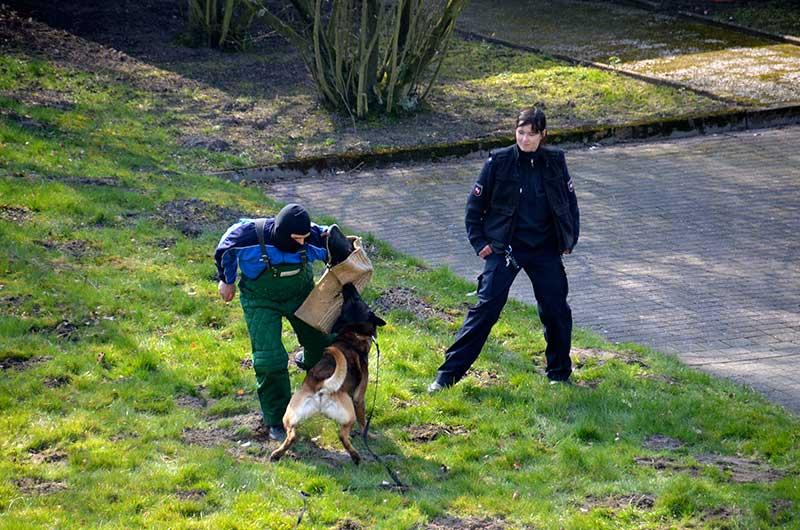 Ausbildung eines Polizeihundes | Symbolfoto: © Polizei Niedersachsen
