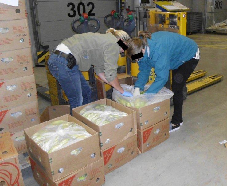Rauschgiftfahnder durchsuchen Bananenkisten | Foto: LKA