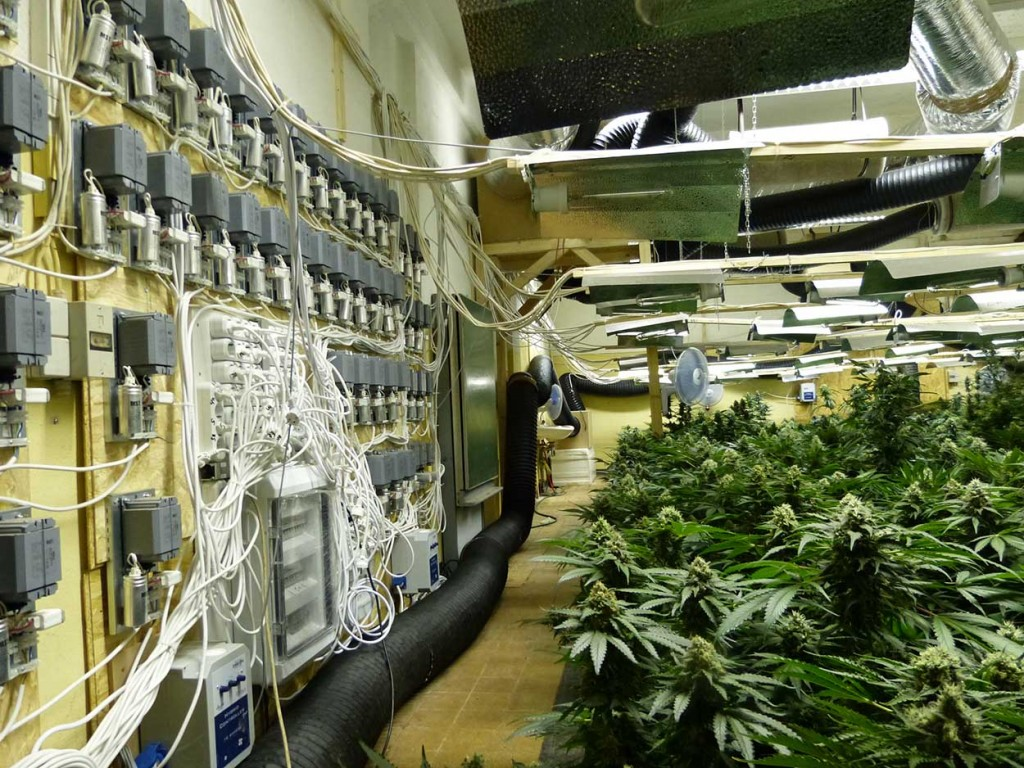 die ausgehobene Indoor-Plantage | Foto: © Zoll