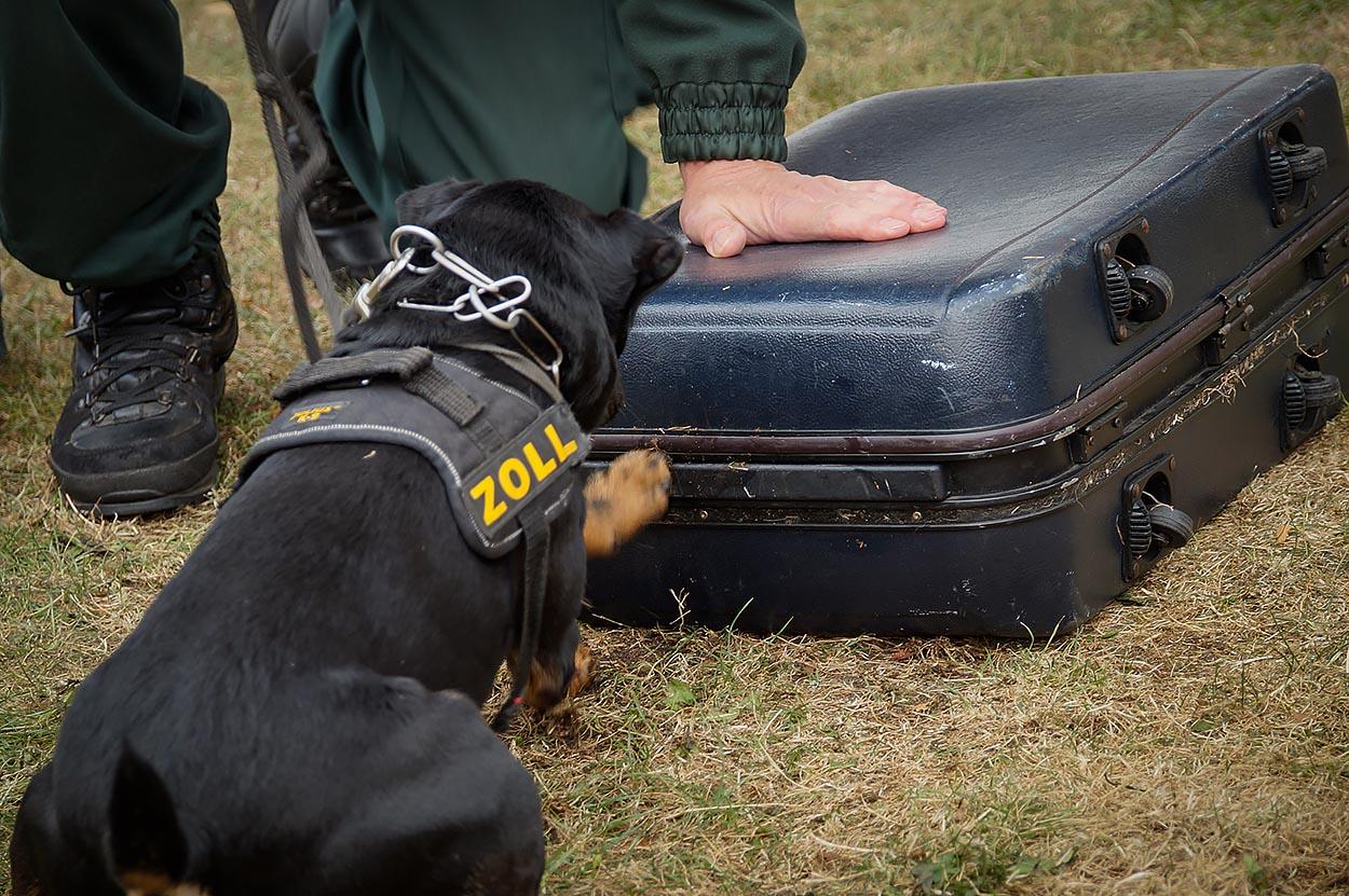 Ein Spürhund des Zolls im Einsatz. Auch Bargeld können die Hunde erschnüffeln. | Foto: © Tomas Moll